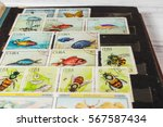 stamp collecting. philatelic.... | Shutterstock . vector #567587434
