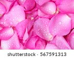The Fresh Light Pink Rose Petal ...