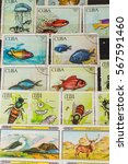 stamp collecting. philatelic.... | Shutterstock . vector #567591460