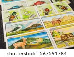 stamp collecting. philatelic.... | Shutterstock . vector #567591784