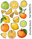 citrus. set of fruit. fresh... | Shutterstock .eps vector #567609070
