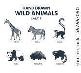 hand drawn textured wild... | Shutterstock .eps vector #567667090