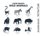 hand drawn textured wild... | Shutterstock .eps vector #567667168