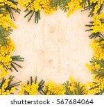 frame of mimosa flower. | Shutterstock . vector #567684064