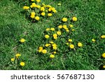 lawn in bad condition in spring ... | Shutterstock . vector #567687130