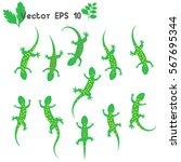 set green speckled  lizard...   Shutterstock .eps vector #567695344