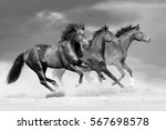 Stock photo horse herd run in dust 567698578