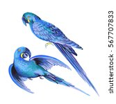 Isolated Editable Vector Parrot....