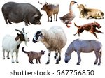 Assortment Of Different Pet An...