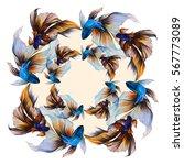 illustration with golden fish ... | Shutterstock . vector #567773089