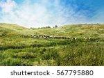 summer sunny landscape. green... | Shutterstock . vector #567795880