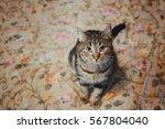 cat sitting on orange carpet  ... | Shutterstock . vector #567804040