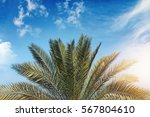 palm leaves with bright... | Shutterstock . vector #567804610