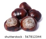 Horse Chestnut Conkers...
