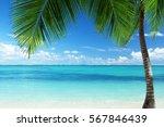 caribbean beach   Shutterstock . vector #567846439