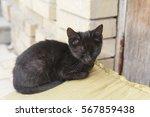 Homeless Black Kitten Sits Nea...