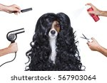 hairdresser dog ready to look... | Shutterstock . vector #567903064