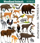 set of vector woodland forest... | Shutterstock .eps vector #567905374