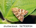 moth insects on plant in the... | Shutterstock . vector #567930934
