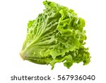 green salad isolated on white | Shutterstock . vector #567936040