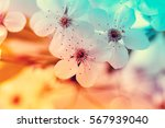 vintage blossoming orchard.... | Shutterstock . vector #567939040