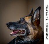 profile of happy german... | Shutterstock . vector #567965953