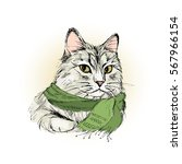 charming male cat with scarf ... | Shutterstock .eps vector #567966154