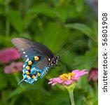 Green Swallowtail Butterfly On...