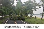On A Tree Fallen Across The Road