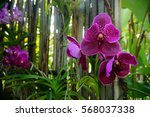 Beautiful Orchid Flower Tree