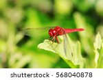 A Red Dragonfly Stay In The...