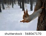 Stock photo red squirrel jumps from a tree 568067170