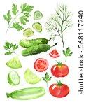 design set of dill  vegetable... | Shutterstock . vector #568117240