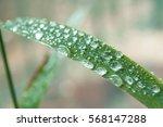 Closeup Of Rain Drops On Bambo...