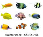 group of fishes on a white background - stock photo