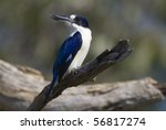 australian kingfisher | Shutterstock . vector #56817274