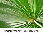 green palm leaf close up...   Shutterstock . vector #568187998