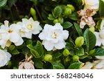 Abstract Flower Background Of...