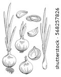 onion graphic black white...