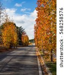 from summer to autumn  changes   Shutterstock . vector #568258576