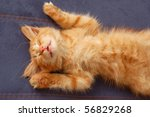 Stock photo kitten sleeps on the back like a log 56829268