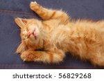 Stock photo kitten sleeps on the back like a log 56829268