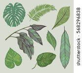 tropical leaves ink drawing... | Shutterstock .eps vector #568296838