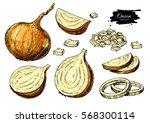onion hand drawn set. full ... | Shutterstock . vector #568300114