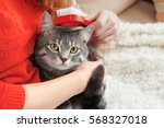 woman combing cute cat with... | Shutterstock . vector #568327018