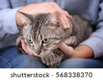 Stock photo cute cat with owner at home closeup 568338370