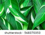 Fresh Tropical Green Leaves...