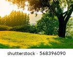 sunset on the park view of... | Shutterstock . vector #568396090