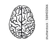 black   white human brain... | Shutterstock .eps vector #568402066