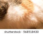 Cat Fur Texture Background